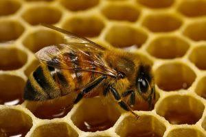 abeja, colmena, comunicación