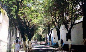 Urge sembrar árboles en casas y camellones